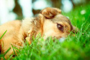 +Garrapatas para nuestro Perro con la Primavera.
