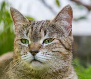 A tu Gato le beneficia comer Piensos Naturales