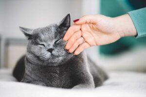 Cuida la salud psíquica de tu #Gato con unos simples consejos, esencial en su #Felicidad