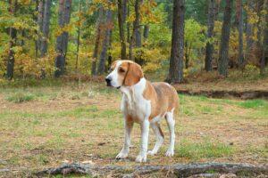 ¿Qué tiene que Comer mi perro con Leishmaniosis?