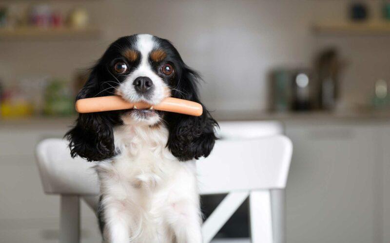 ¿Leishmaniosis cómo saber si mi Perro la tiene?