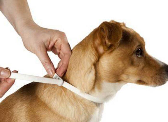 El Collar SCALIBOR proporciona total protección frente a picaduras de Parásitos.