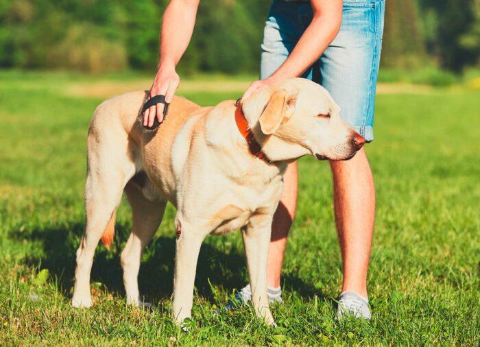 ¿Por qué es bueno Cepillar a nuestro Perro Semanalmente?