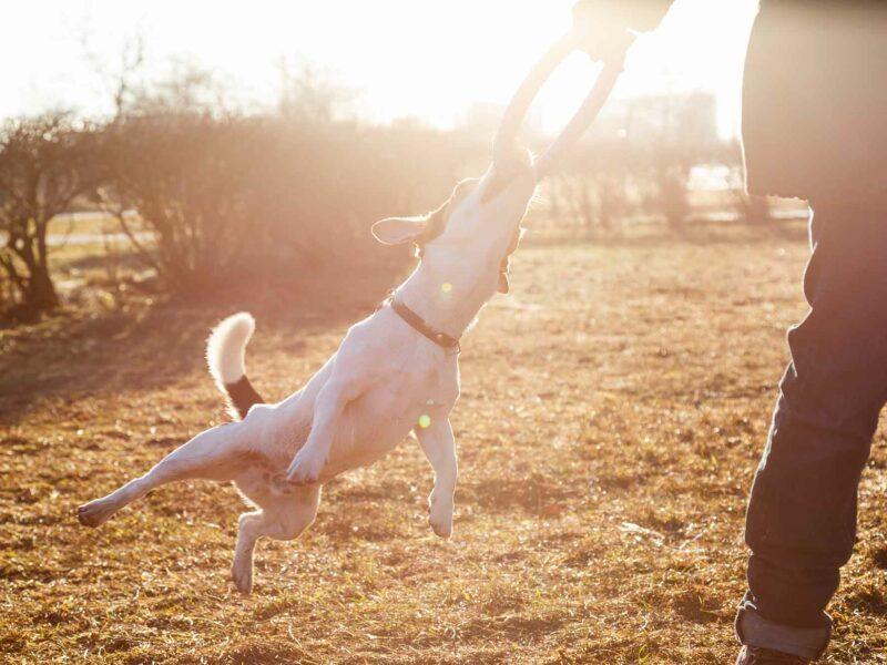 Advantix protege a tu perro con Pipetas Antiparasitarias
