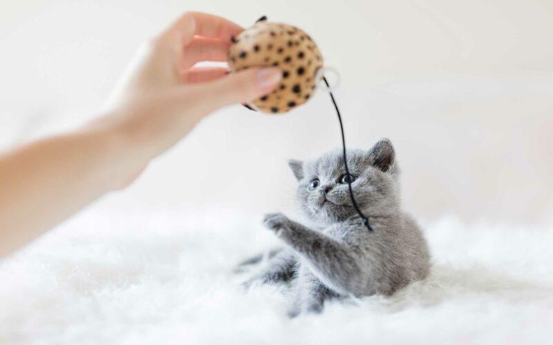Tu Gato es Feliz si juegas con él