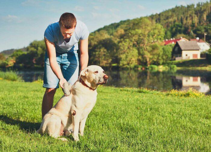 3 Consejos para cepillar a tu Perro de forma correcta