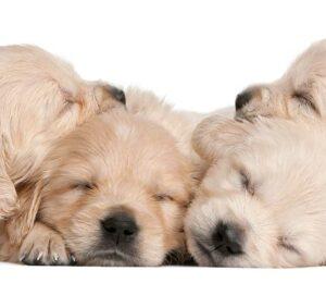 Descansar es importantísimo para nuestro Perro