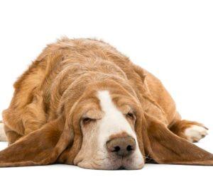 El lugar idóneo para el descanso de tu mascota. ¿Cómo crearlo?