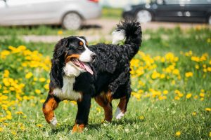 La cola de tu Perro. Gran indicador de salud.