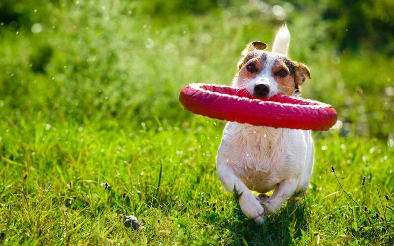 Sarro en Perros = Problemas de Salud