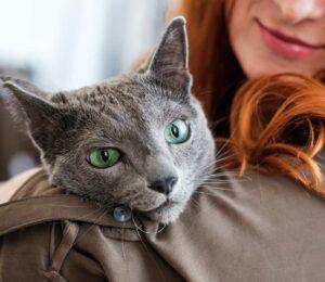 Prevenir la pérdida de Peso de tu Gato es primordial para su Salud
