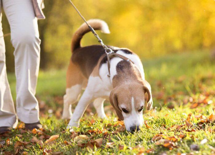 Claves para que tu cachorro haga pipí y caca en la calle
