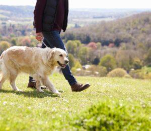 Caminar con Correa de manera adecuada para tu Perro