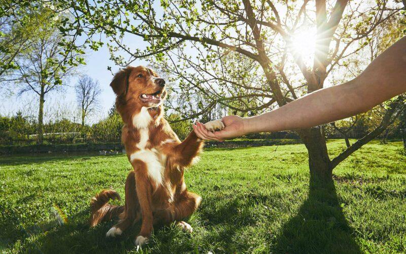 «Dame la patita». ¿Cómo enseñar a tu perro a que te dé la pata?