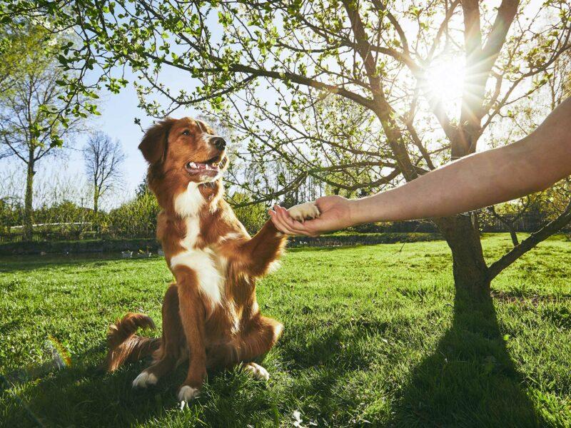 """""""Dame la patita"""". ¿Cómo enseñar a tu perro a que te dé la pata?"""