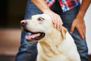 Acariciar a un Perro ¿cómo saber cuándo hacerlo?