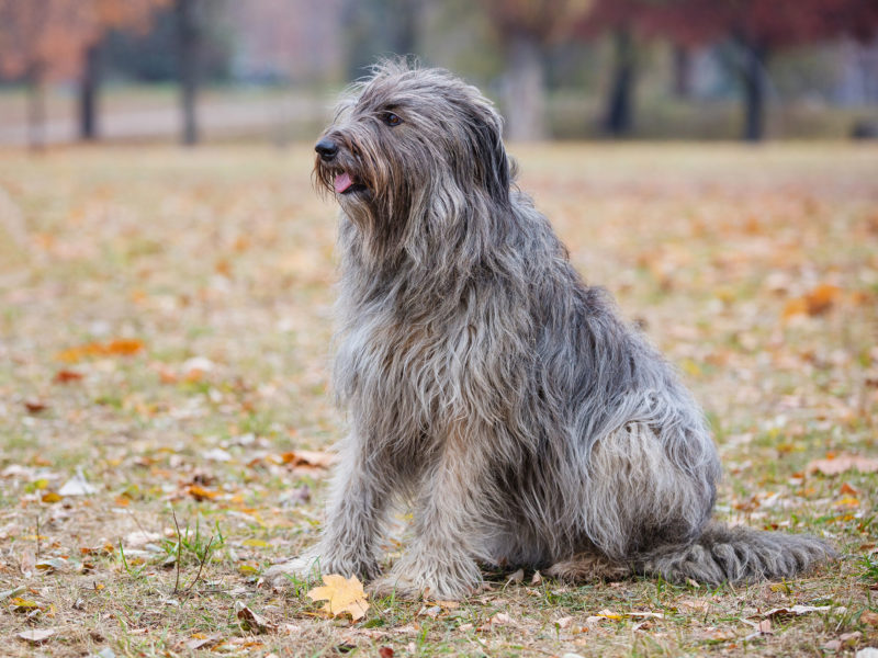 6 Grandes mentiras sobre perros