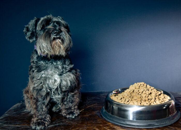 Mi perro no come; posibles causas