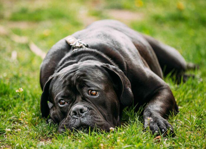 Causas de la Depresión en Perros.