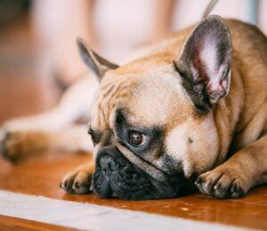Perro deprimido. Cómo saber si vuestro perro está deprimido
