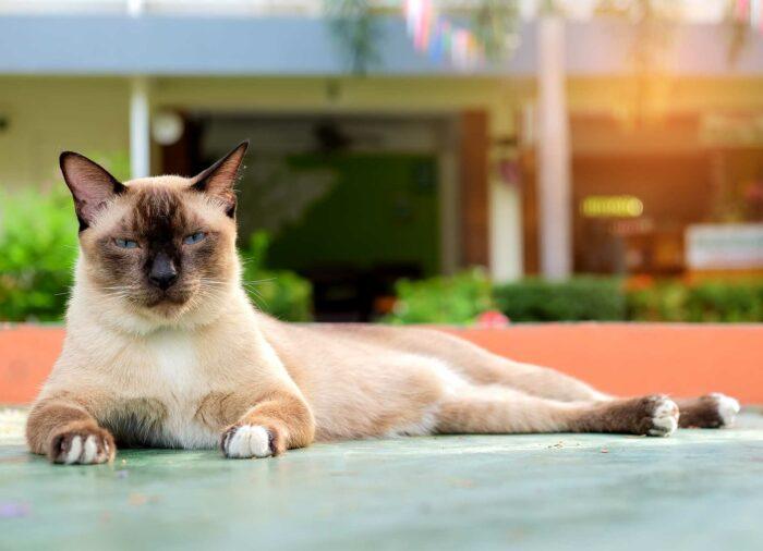 El ronroneo del #Gato. ¿Por qué ocurre?