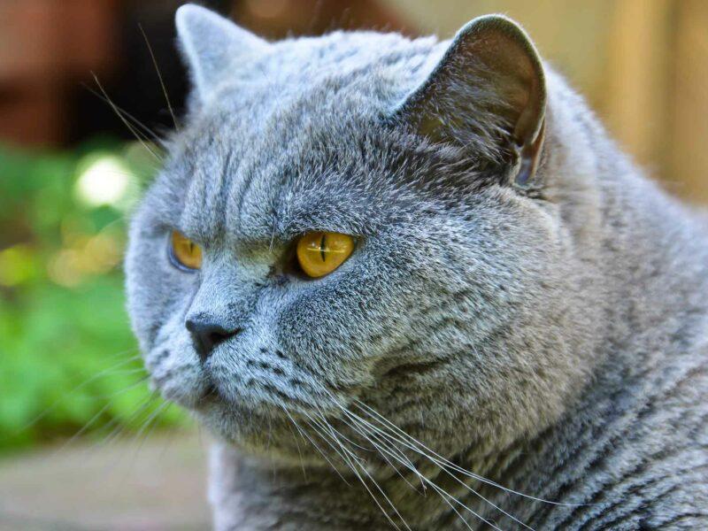 Insuficiencia renal #felina. Prevención para tu #Gato.