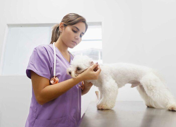 Otitis en #perros. ¿Qué hacer?