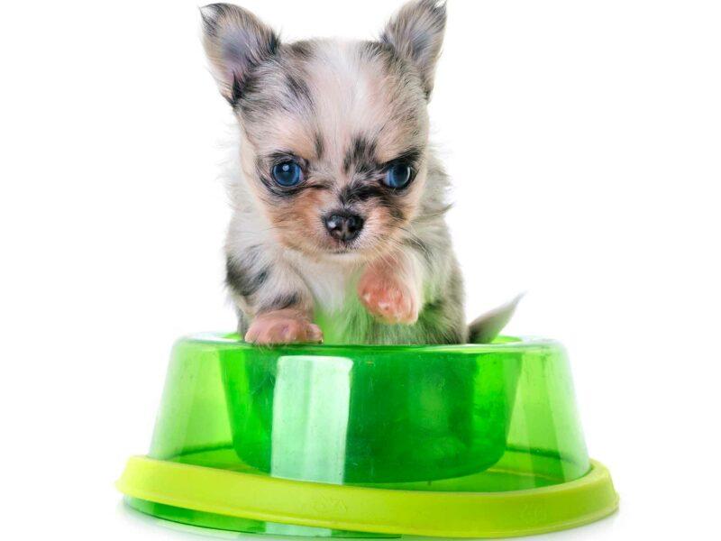 #Pienso para cachorros, ¿cuándo empezar?