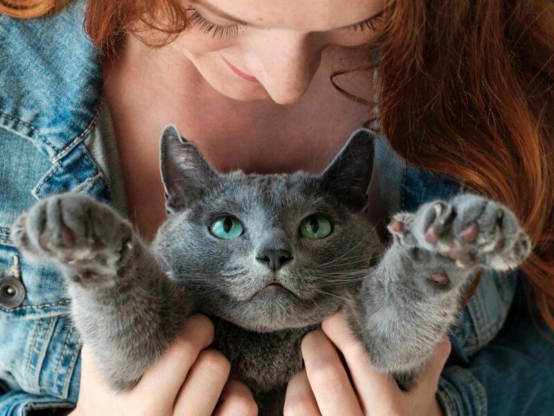 Toxoplasmosis en #Gatos. Consecuencias en #Embarazo.