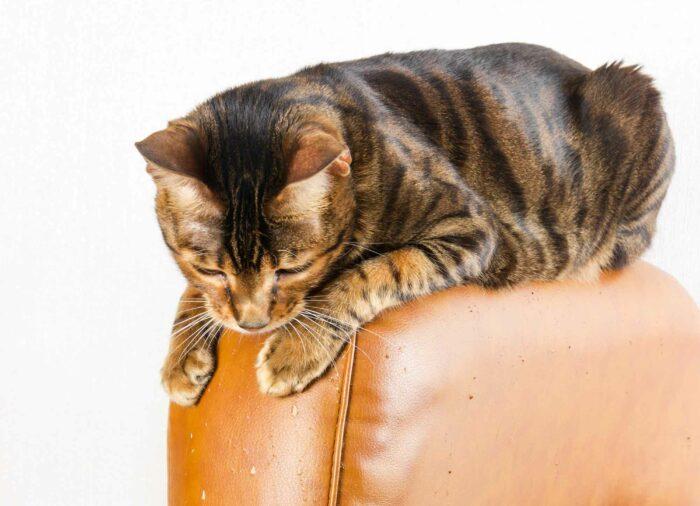 Tu Gato araña el Sofá. ¿Cómo evitarlo?