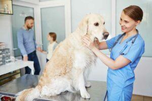 Perro con #Conjuntivitis. Causas, Síntomas y Tratamiento