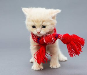 Calicivirus #felino. Síntomas y tratamiento para mi #Gato.