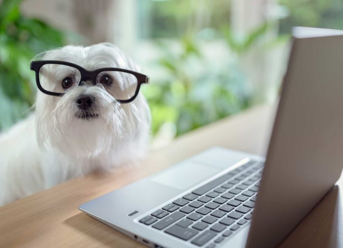 Visión canina. ¿Cómo ven los perros?