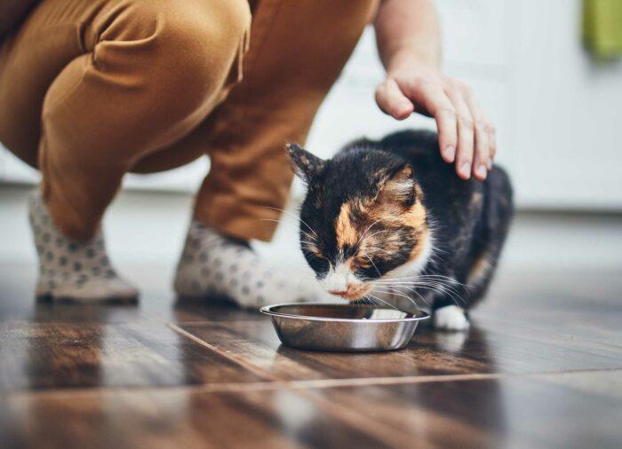 Alimentación natural #felina.