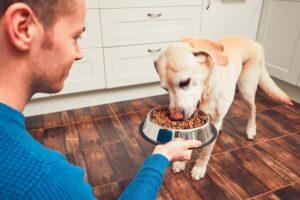 Antioxidantes naturales para mi #Perro