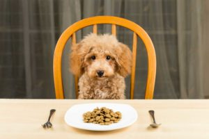 Necesidades nutricionales de los #Perros según Edad.