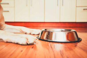 Ventajas del pienso Grain Free. Salud mascotas.