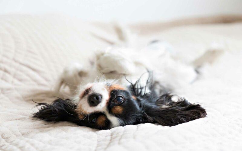 Ácidos grasos esenciales en #Perros.