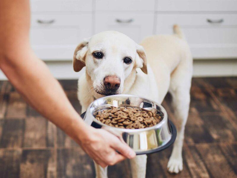Alergias e intolerancias Alimentarias en los #Perros