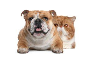 Causas de #Sobrepeso y #Obesidad en Perros y Gatos
