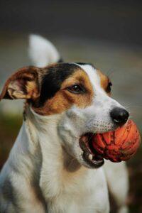 Claves para acabar con el mal aliento en #Perros