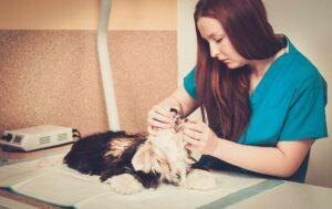Limpieza bucal Veterinaria para mi #Perro ¿Cuándo realizarla?
