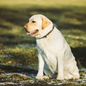 Plan de Adelgazamiento para Perros