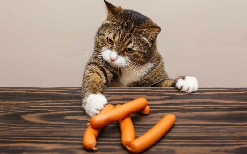 Alimentos prohibidos para #Gatos