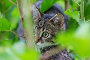 Alimentos tóxicos para #Gatos