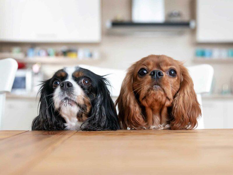 ¿Cómo son las Heces de un #Perro alimentado correctamente?