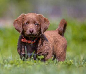 Necesidades nutricionales del #Cachorro