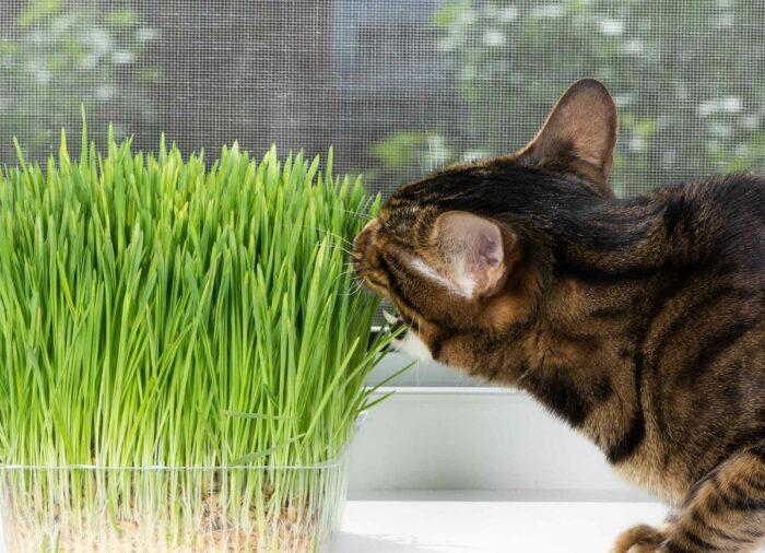 Plantas Prohibidas para #Gatos