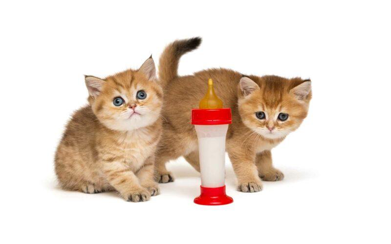 ¿Podemos dar leche a los #Gatos?