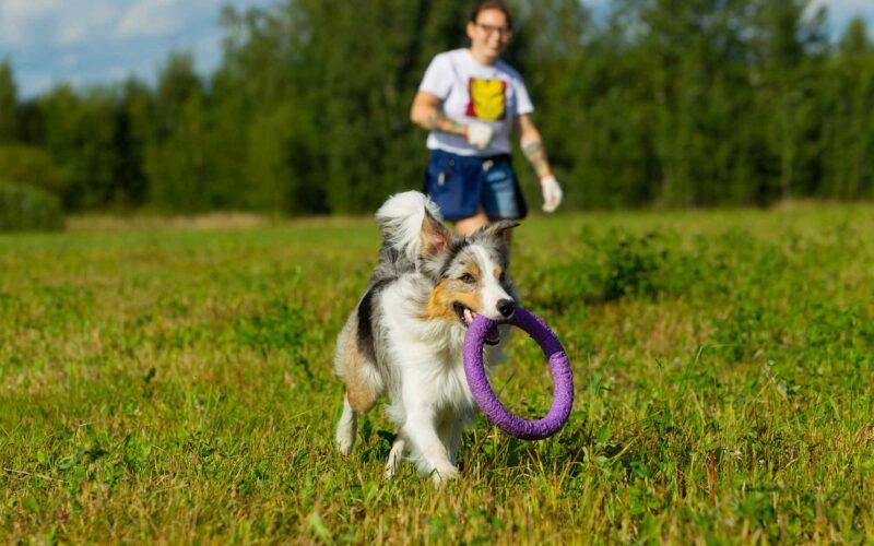 Juego para #Mascotas. Camino con obstáculos